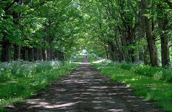 Enjoy a Wirral Walk