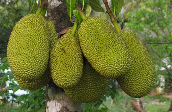 Foodie trends: Jackfruit!
